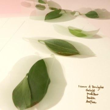 Avey Tare - Essence of Eucalyptus